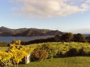 The Writers Cottage - Great Barrier Island