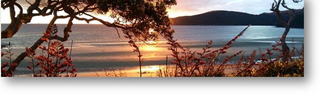 The Beach House Banner - Go Great Barrier Island