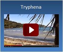 Tryphena